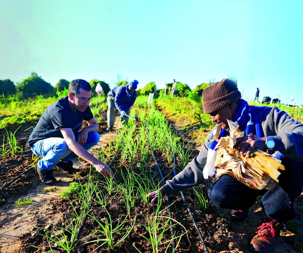 חקלאות אתיופית בפקולטה ברחובות