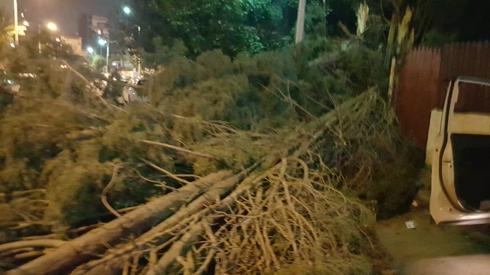 קריסות עצים ברחבי העיר