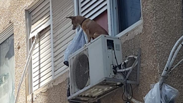 קשר את הכלב על מנוע המזגן מחוץ לחלון