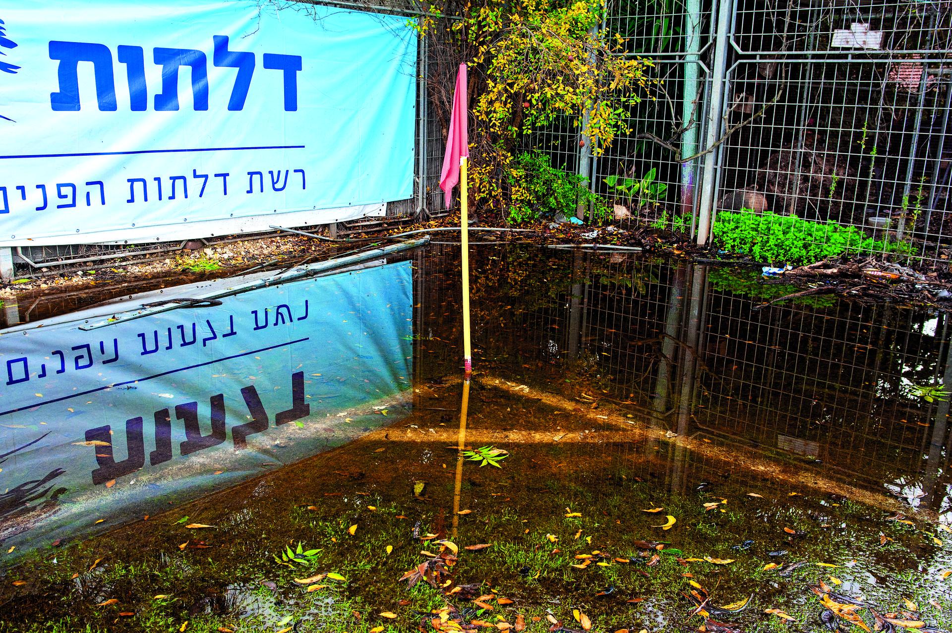 דגל קרן שטבע בתוך שלולית ענק   צילום: יואב דודקביץ'