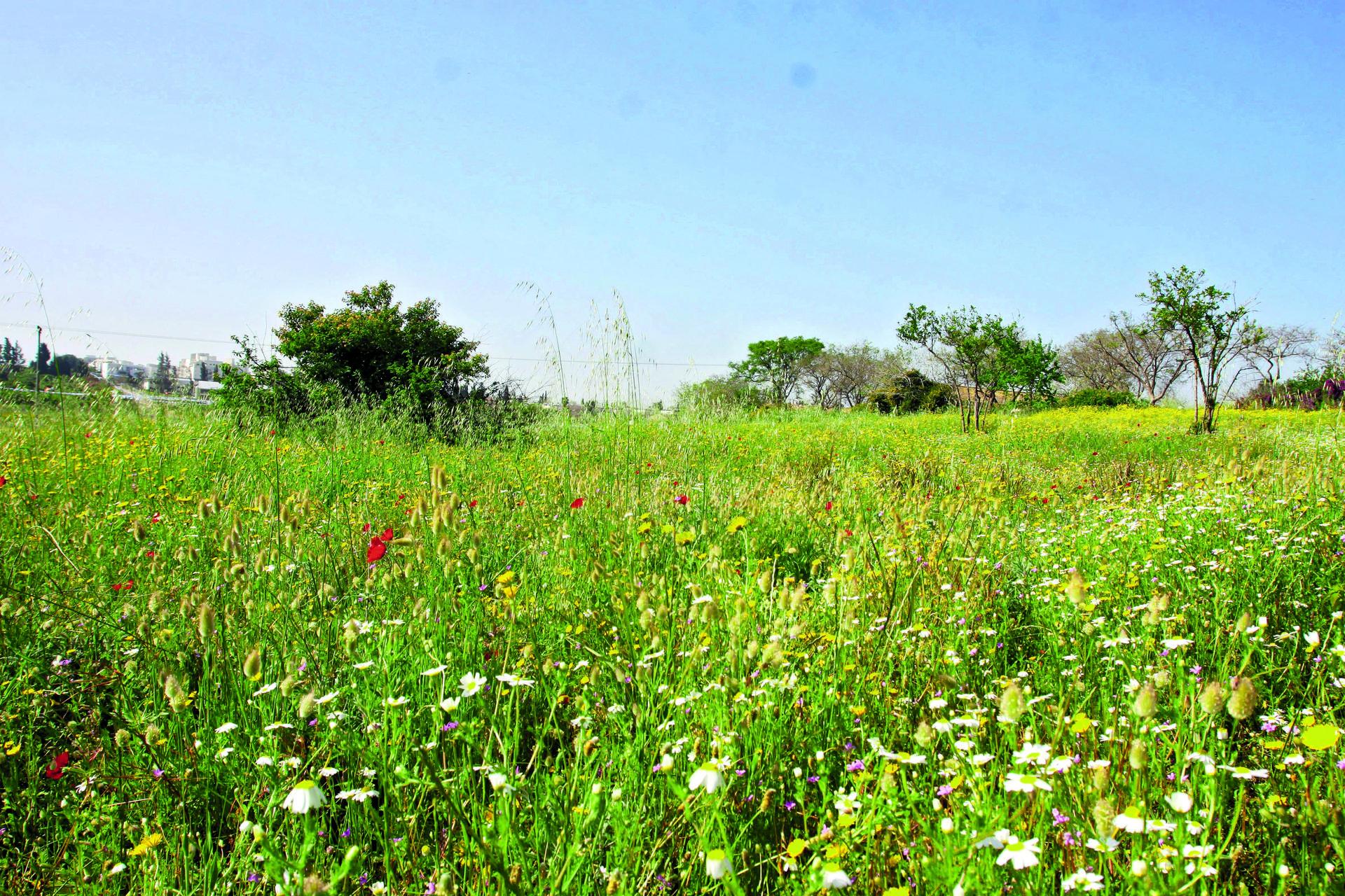 גבעות הכורכר   צילום: אבי מועלם