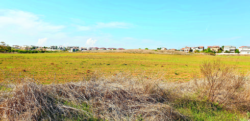 גבעות הכורכר, השבוע | צילום: שי אלבלינג